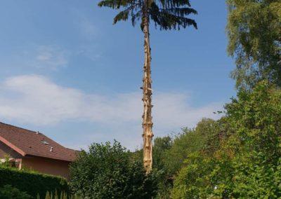 arbre-foudroye-ban-de-laveline (1)