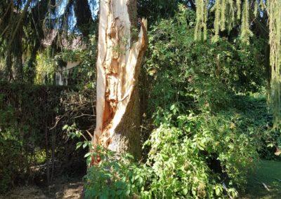 arbre-foudroye-ban-de-laveline (3)