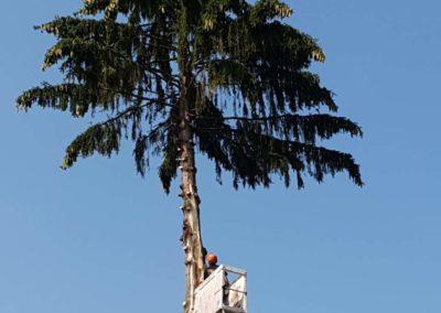 arbre-foudroye-ban-de-laveline (4)