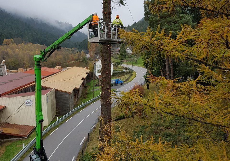 Élagueur grimpeur à Saint-Dié