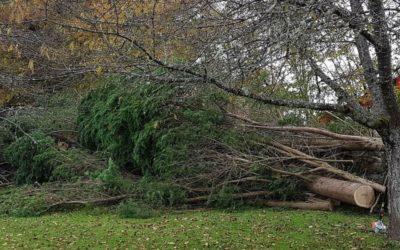 Chute d'arbre à Saint-Dié