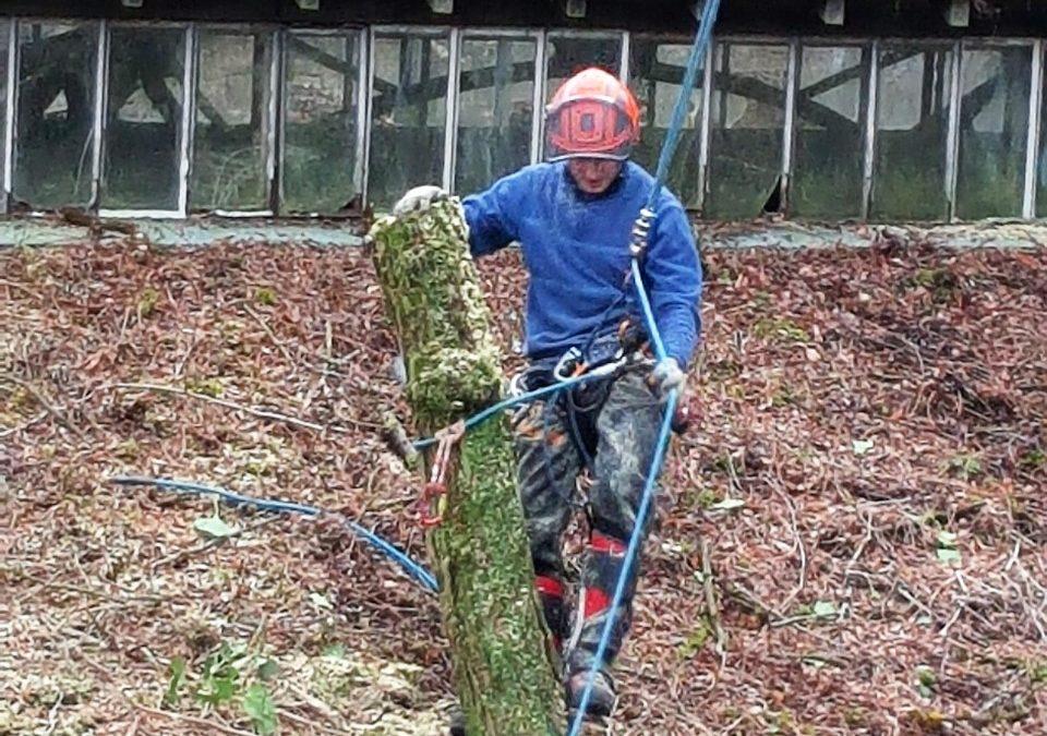 Entreprise d'élagage dans les Vosges