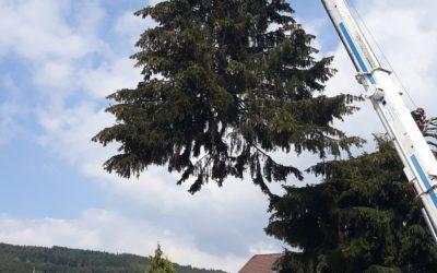 Élagage arbre à Saint-Dié